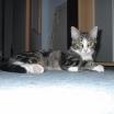 cat2058