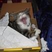 cat2115