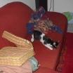 cat2695
