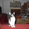cat2697
